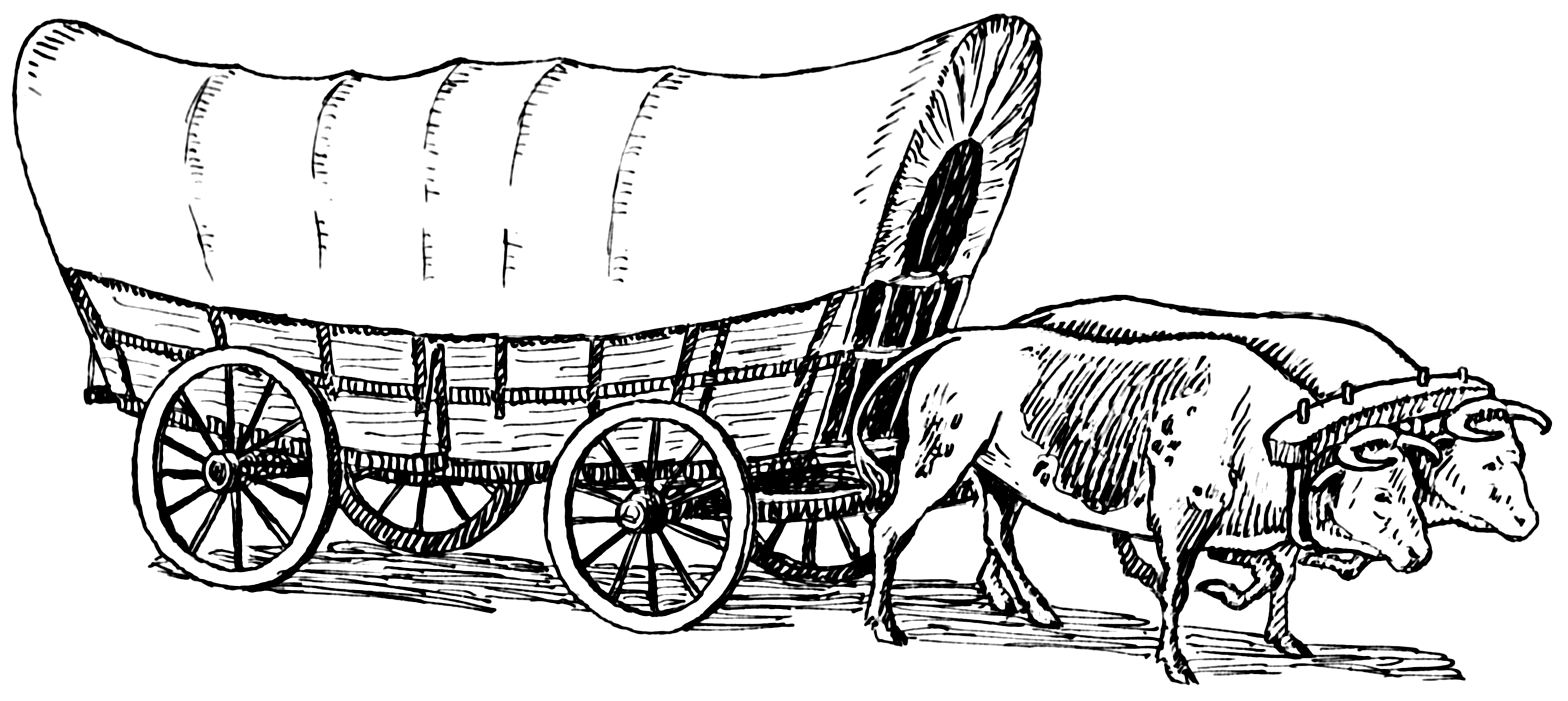 drawing of a pair of oxen pulling covered wagon