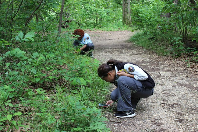 Two Biodiversity Youth Ambassadors use the mobile app iNaturalist on Theodore Roosevelt Island
