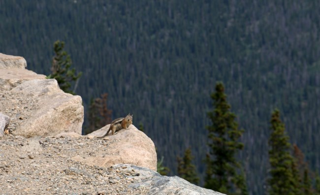 "A chipmunk looks back from a ledge, seeming to say ""hello!""."
