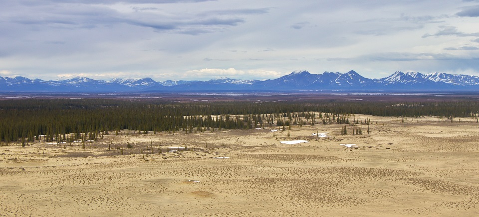 Sand dunes with a forest and mountain range in the background