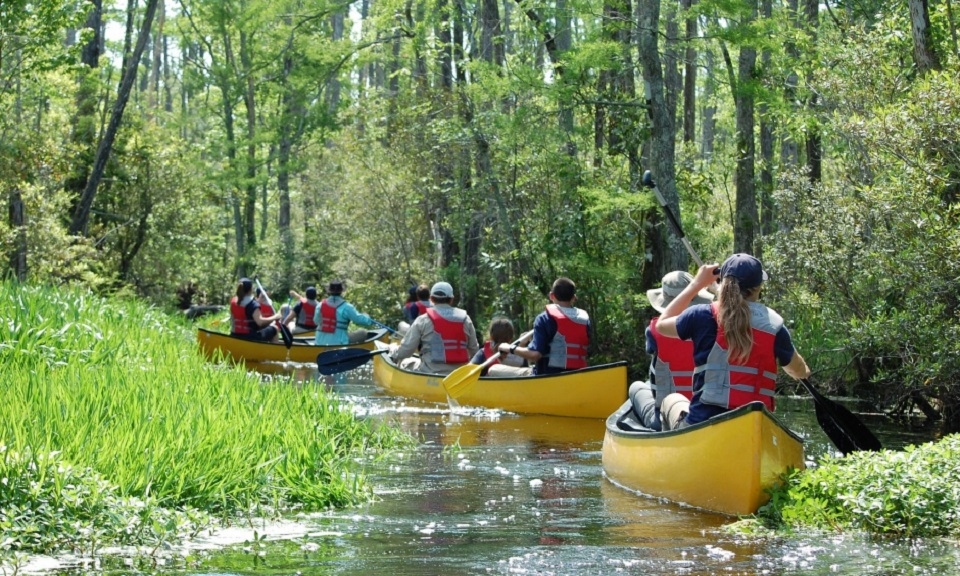 Group canoeing on a river through the woods