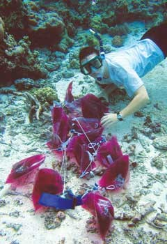 A woman in snorkel gear is underwater on the ocean floor with at least ten small baggies filled with purple dye.