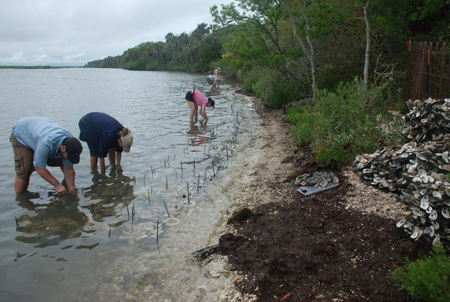 Volunteers creating a living shoreline to protect Castle Windy archeological site at Canaveral National Seashore