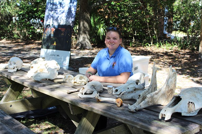 NPS volunteer sitting at a display table with bones