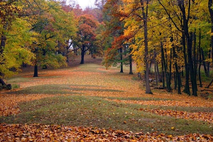 Fall colors paint the trees surrounding Marching Bear Mounds in Effigy Mounds National Monument. NPS photo.
