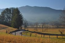 Trees along a roadway in Great Smoky Mountains National Park. NPS photo by J Bennett.