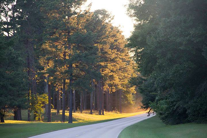 Sunlight shines through trees lining a section of roadway in Natchez Trace Parkway. NPS photo.
