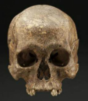 A skull reportedly found near Gettysburg National Military Park is not that of a Civil War soldier. Smithsonian National Museum photo by D Hurlbert.
