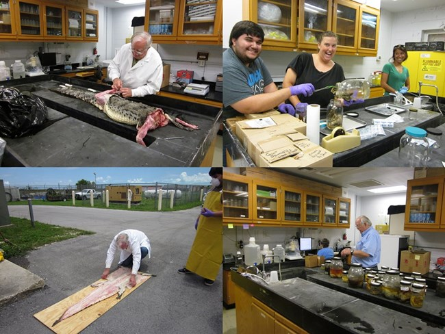 Natural science collections training for SFCMC staff and interns