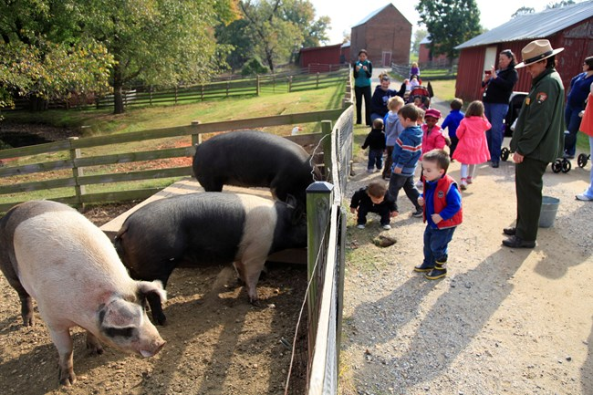 Children look inside a pig pen on an educational tour of Oxon Hill Farm.