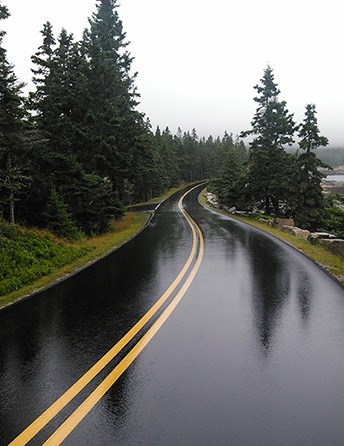 Rainsoaked paved road curving between trees in Acadia National Park.