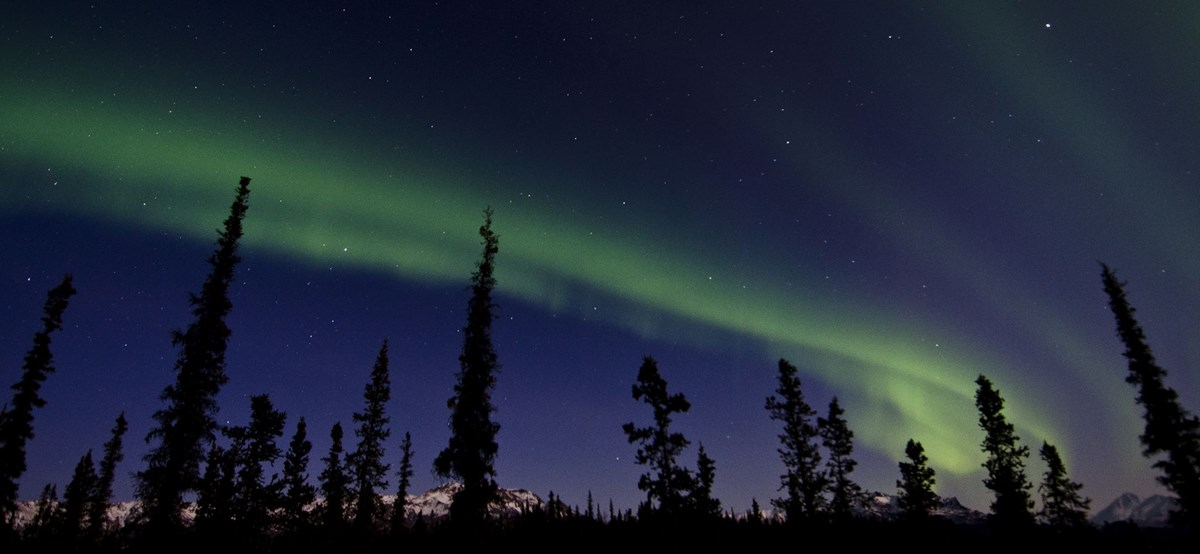 colorful northern lights about trees in Denali National Park