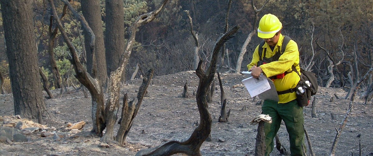 Scientists evaluate if and which treatments are necessary to restore an area post-fire.