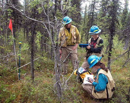 Three fire ecologists collect data outside in a forest