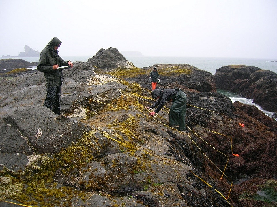 Scientists monitor the intertidal zone.