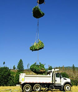 Sling loads of plant material are dropped into a dump truck from above.
