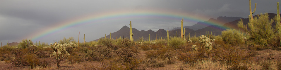 Rainbow over Organ Pipe Cactus NM