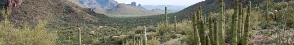 scenic view from the Ajo Mountrain Drive