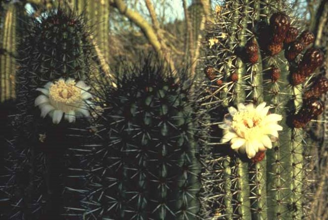 Flowers on organ pipe