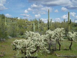 The green desert is surprising to most visitors who expect sand and gravel in the Sonoran Desert