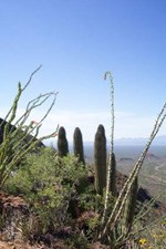 view from the route to Mt. Ajo