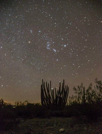 constellations over an organ pipe cactus