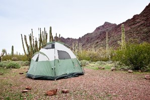 tent in front of cacti at alamo canyon