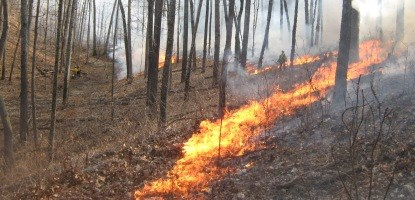 a fire line burns in the woods with nps firefighters onlooking