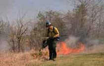 Firefighter igniting a prescribed fire