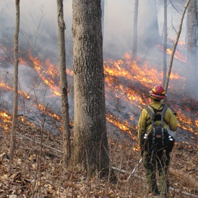 Firefighter monitoring a prescribed fire