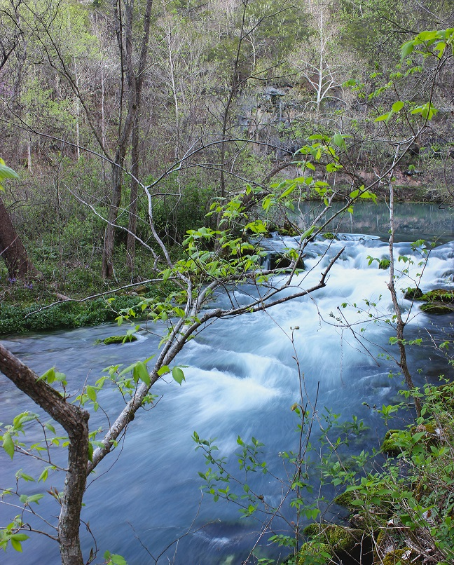 laws and regulations protecting ozark springs