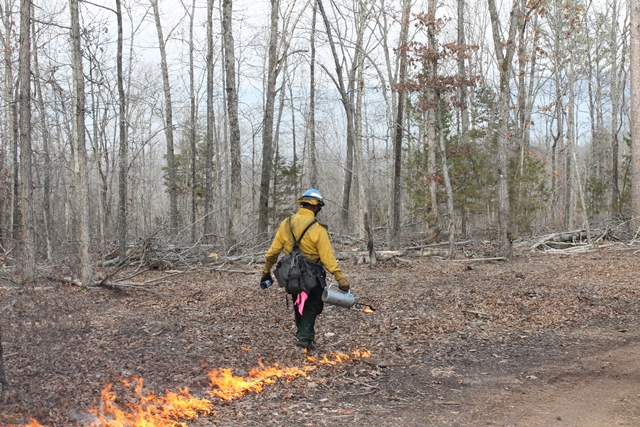 wildland firefighter with torch setting back fire