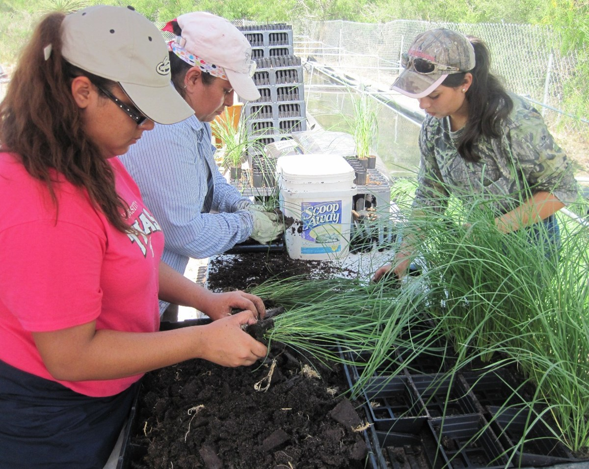 Volunteers tend to Gulf cordgrass seedlings
