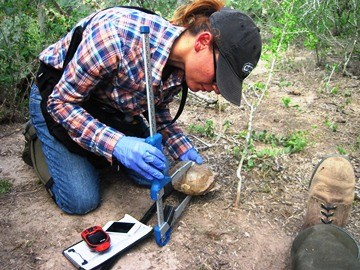 Volunteer taking measurements of a Texas tortoise