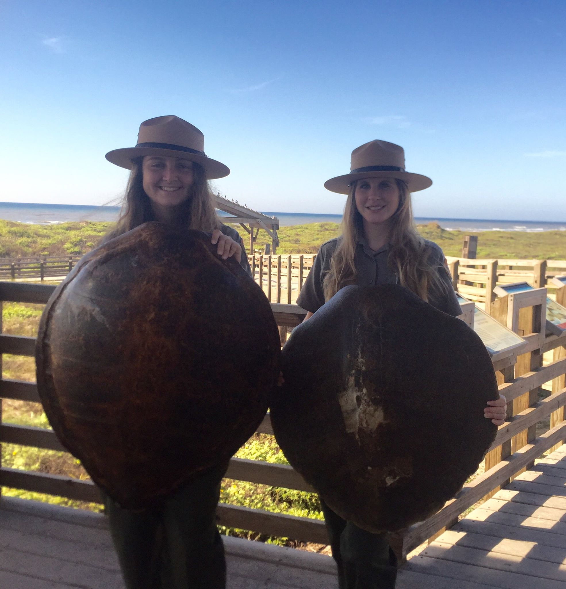 Interpretive Park Rangers Rangers pose with green and Kemp's ridley sea turtle shells that are used in school programs