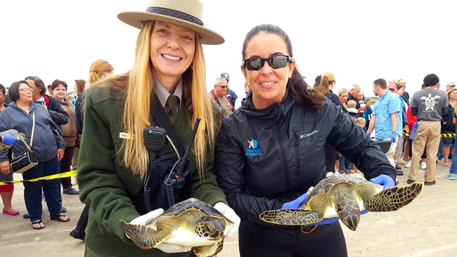 NPS staff member and a Texas State Aquarium Staff member, standing in front of a crowd, each hold a rehabilitated green sea turtle ready to be released back into the ocean.