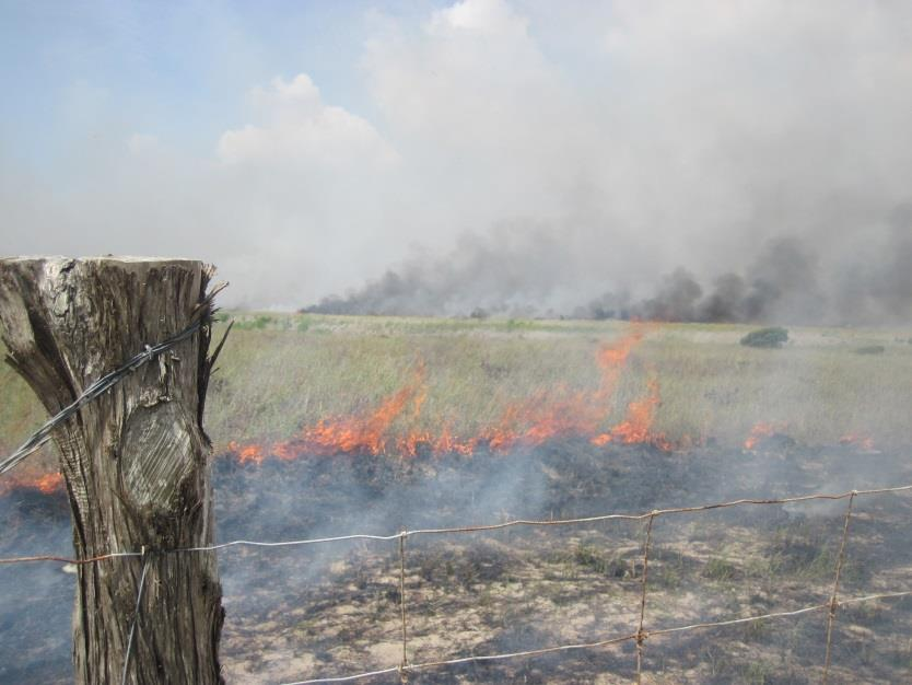 Fire management at Padre Island National Seashore