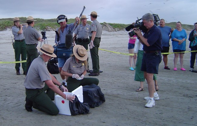 Media coverage of hatchling sea turtle release