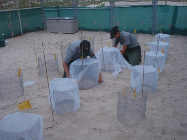 Two park rangers install protective enclosures over sea turtle nests buried in the sand on Padre Island.
