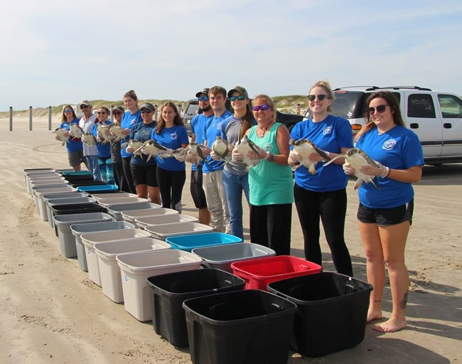 Staff with the Texas Sealife Center stand on the beach holding rehabilitated green sea turtles ready to be released back into the ocean.