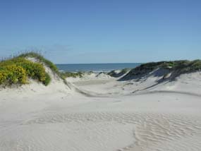 trough in fore-island dunes