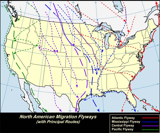 Birds Padre Island National Seashore US National Park Service - Weather patterns map us and bird migration