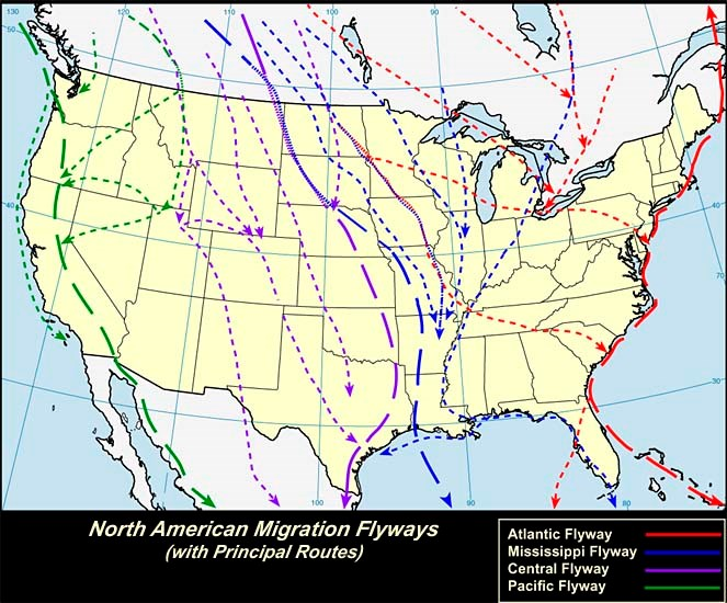 Bird migration routes in the United States