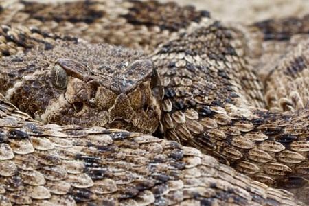 Reptiles - Padre Island National Seashore (U S  National