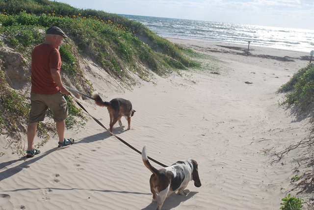 A visitor walks his dogs down to the beach