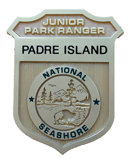 Junior ranger badge with words Padre Island National Seashore