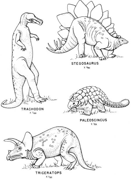cenozoic animals coloring pages - photo#5