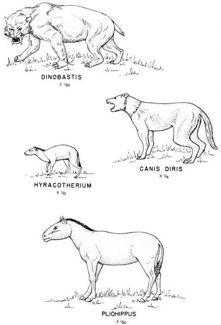 how to draw cenozoic grasses