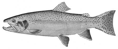 Glacier Np Fishes Of Glacier National Park Montana