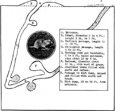 Region III Quarterly (1941)